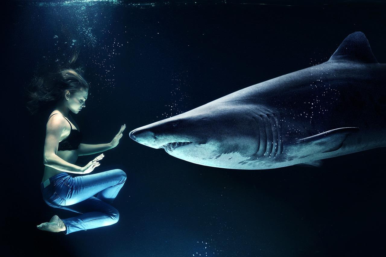 磯貝花音とサメ
